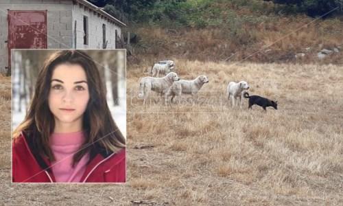 Svolta nelle indaginiGiovane sbranata da un branco di cani a Satriano: c'è un indagato per omicidio colposo