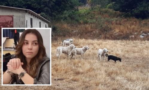 I cani nella pineta di Satriano e, nel riquadro, Simona Cavallaro