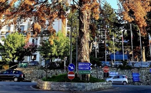 La triste morte dello storico pino di Camigliatello