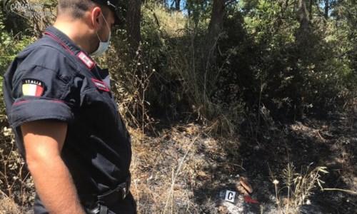 L'indaginePascolo abusivo su terra bruciata nel Cosentino: denunciati sindaco e comandante della Municipale