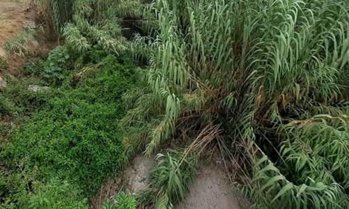 Dissesto idrogeologicoLamezia, scarsa manutenzione dei fiumi: cresce la paura in attesa dell'autunno e delle piogge