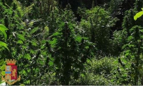 Il blitzScoperta una piantagione di canapa indiana nel Catanzarese: due arresti