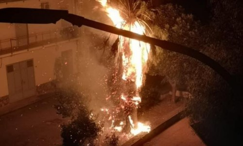 Palme in fiamme