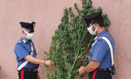 Armi e droga nel Crotonese, controlli a tappeto dei carabinieri: un arresto e una denuncia