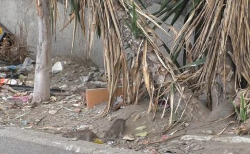 Topi e degrado al Rione Marconi di Reggio Calabria
