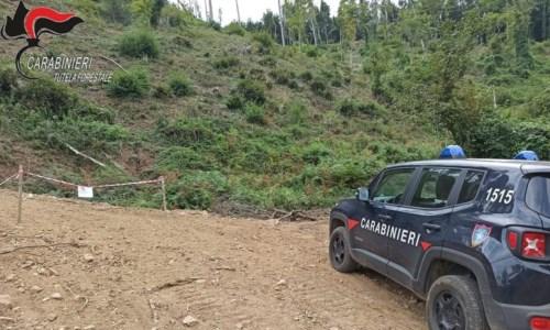 Nel CosentinoSan Fili, sequestrata strada abusiva realizzata per l'esbosco: due denunce