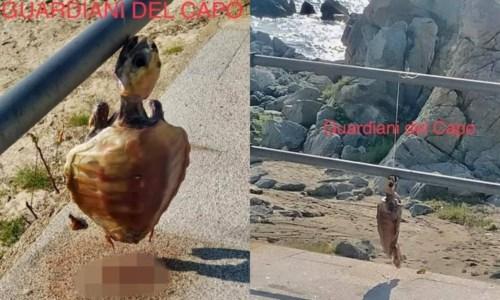 La vicendaSfregio a Ricadi, tartaruga impiccata alla ringhiera sul lungomare