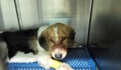 Cane Chicco dopo le cure
