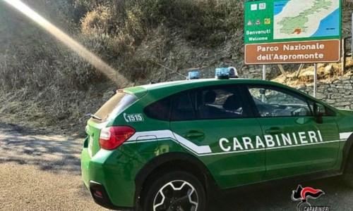Caccia illegalmente nel Parco d'Aspromonte: la Forestale denuncia un 35enne