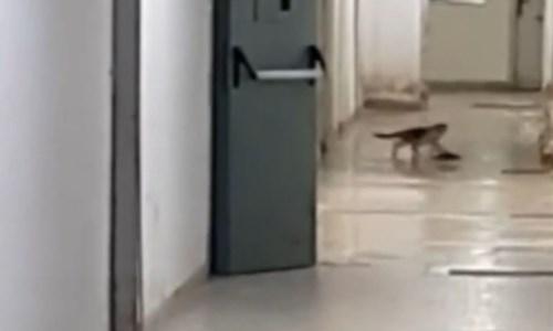 Il gatto e il topo nell'ospedale di Paola
