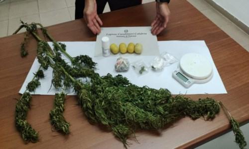 Il blitzColtivava marijuana in casa: 49enne denunciato nel Catanzarese