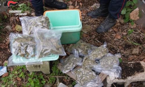 Platania, aveva oltre un chilo di marijuana e munizioni in casa: arrestato