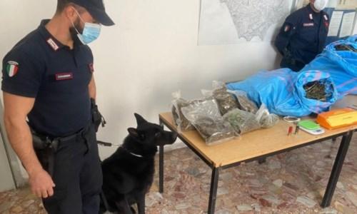 Cetraro, rivenuti 11 chili di marijuana all'interno di un magazzino: due arresti