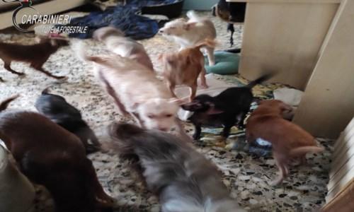 Crotone, 29 cani in un appartamento nel degrado: una denuncia per maltrattamento di animali