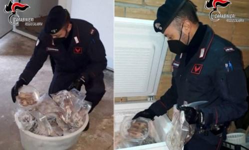 Oltre 200 ghiri congelati in casa e confezionati in pacchetti, tre arresti nel Reggino