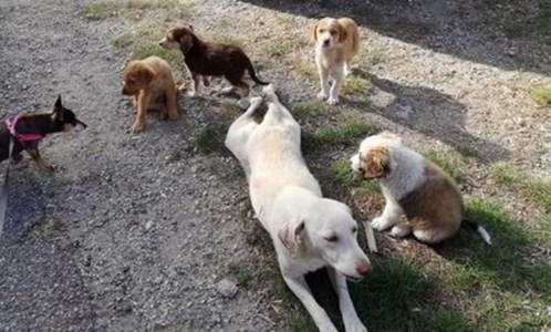 Sophia e i suoi cuccioli (foto sito Aidaa)