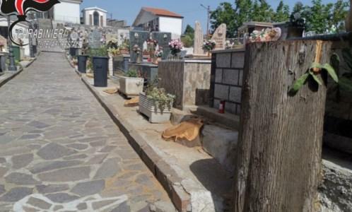Il taglio dei cipressi nel cimitero di Caloveto
