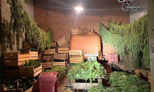 La marjuana sequestrata a Taurianova