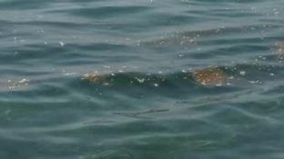 Mare sporco a Sellia Marina