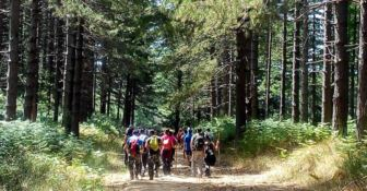 Monterosso, un parco eolico di 8 ettari mette a rischio 2mila alberi