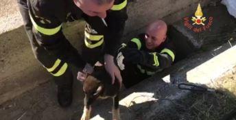 Catanzaro, cucciolo precipita in un pozzo: salvato dai vigili del fuoco (FOTO)