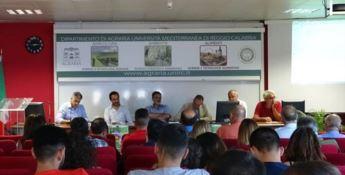 Apicoltura, Aprocal e Università di Reggio Calabria insieme per l'ambiente