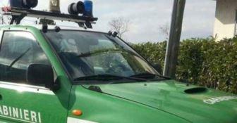 'Ndrangheta, truffa ai danni della Regione. Sette arresti nel Reggino