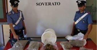 San Sostene, 4 chili di marijuana nel magazzino del bar