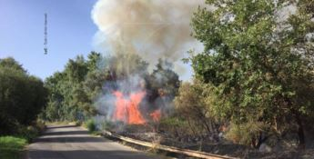 La Calabria flagellata dalle fiamme, ancora incendi in diverse zone