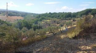 Fiamme vicino all'agriturismo Feudo degli Ulivi tra Borgia e Squillace (FOTO)