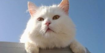 Il gatto-mascotte muore e sui social piovono centinaia di commenti (FOTO)
