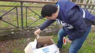 Cuccioli abbandonati a Donnici, salvati dalla polizia municipale