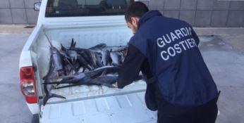Il pescato sequestrato