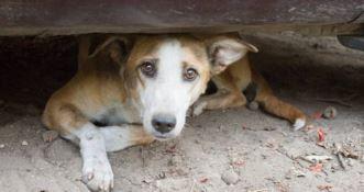 Cani e gatti uccisi con veleno per topi, la denuncia del Movimento animalista