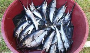 Pesca illegale a Palmi
