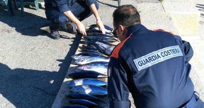 Pesca illegale di tonno rosso