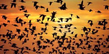 Il suggestivo spettacolo dei rapaci migratori sulle vette dell'Aspromonte