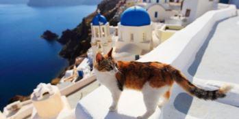 AAA Accarezzatori di gatti cercasi