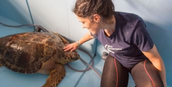 Centro tartarughe, MotorShow 2Mari: «Si salvi un'eccellenza calabrese»