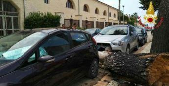Tragedia sfiorata a Briatico: grosso albero cade in strada