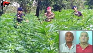 Sorpresi mentre raccolgono marijuana, due arresti a Candidoni