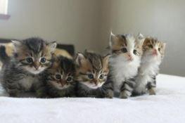 Cuccioli seviziati e uccisi, denunciata 'la serial killer dei gattini'