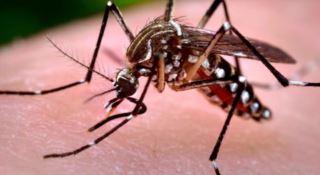 Febbre del Nilo, 125 persone contagiate in Italia