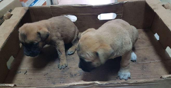 I cuccioli soccorsi dalla polizia