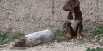 Il cucciolo ucciso vegliato dalla mamma e dai fratellini - VIDEO