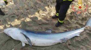 Lo squalo spiaggiato