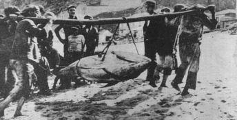 Pescatori di Pizzo nella prima metà del '900