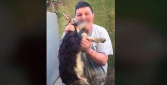 Morde una capra e posta il video, chiuse le indagini per il responsabile