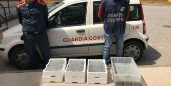 Prodotti ittici irregolari, sequestri e sanzioni della Guardia Costiera