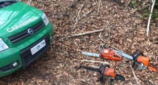 Sorpresi a tagliare legname nel bosco, tre arresti a Cerzeto
